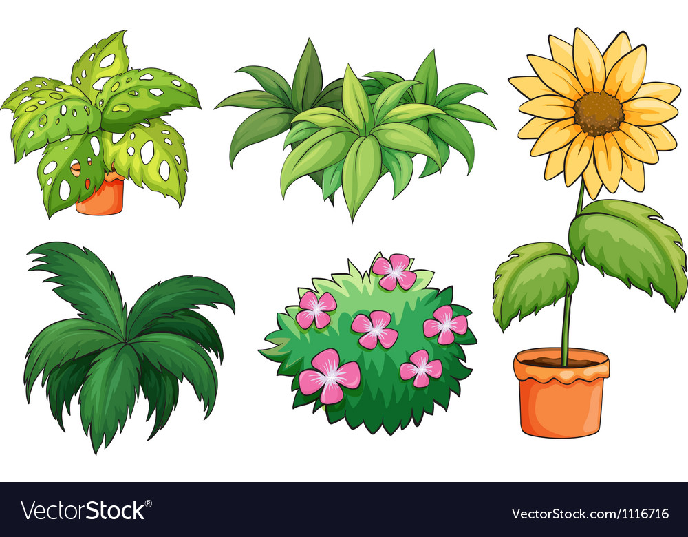 Flowerpots and plants vector