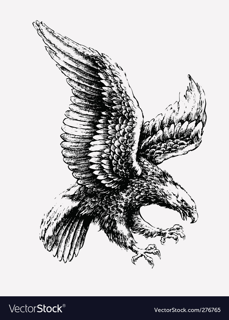 Swooping eagle vector