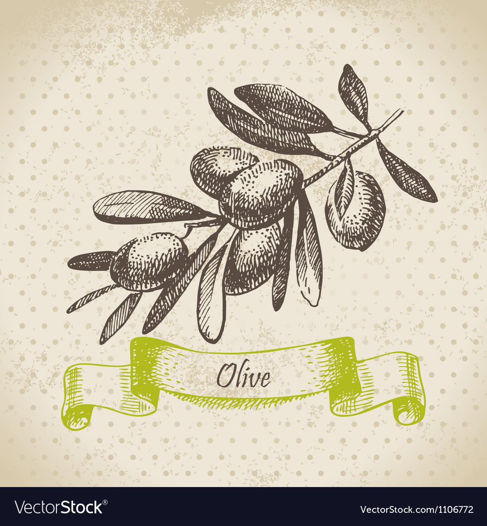 Olive hand drawn vector