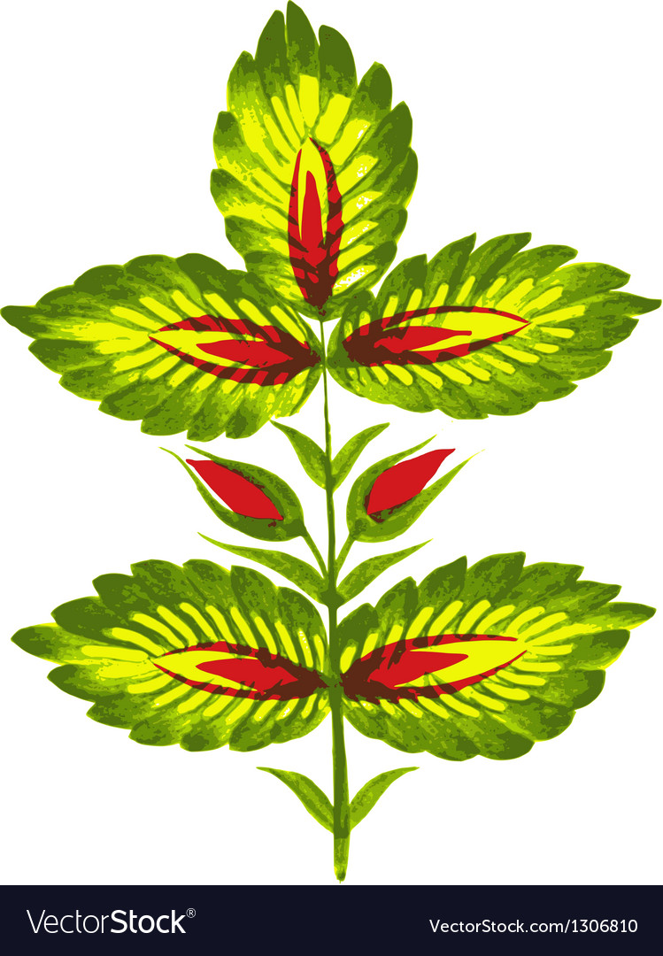 Green twig vector