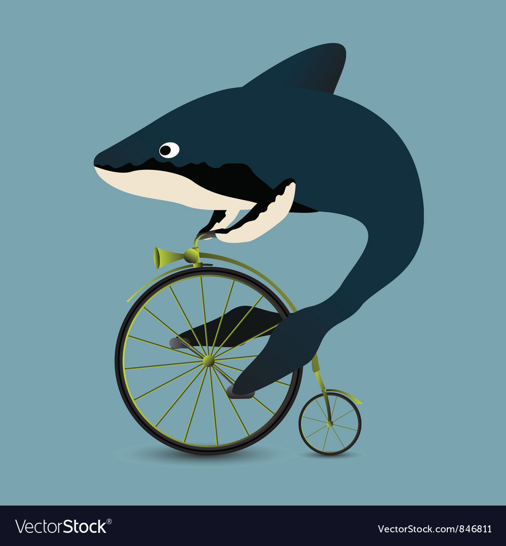 Whale on a bicycle vector