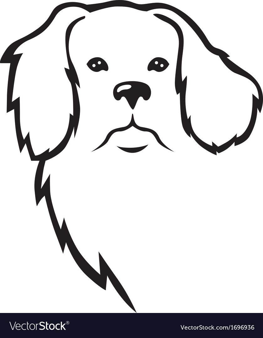 Niuf dog head vectorDog Head Vector