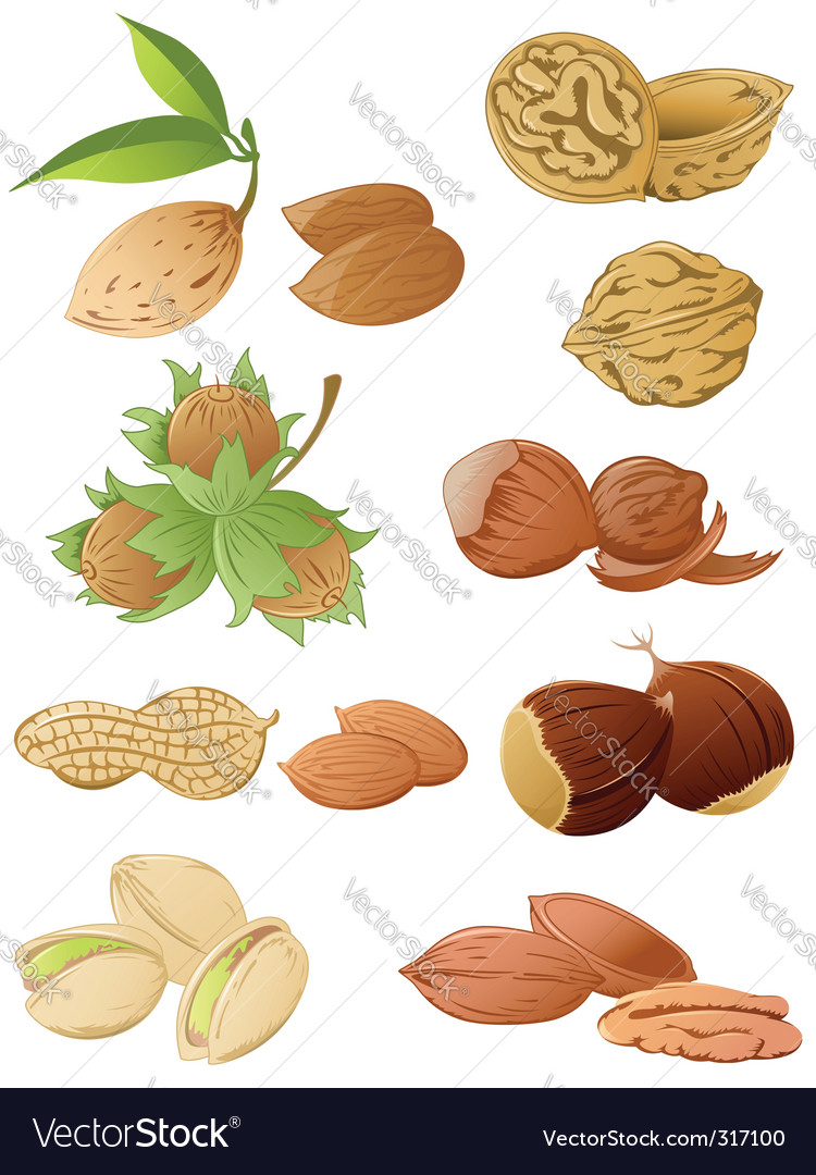 Set of various nuts vector