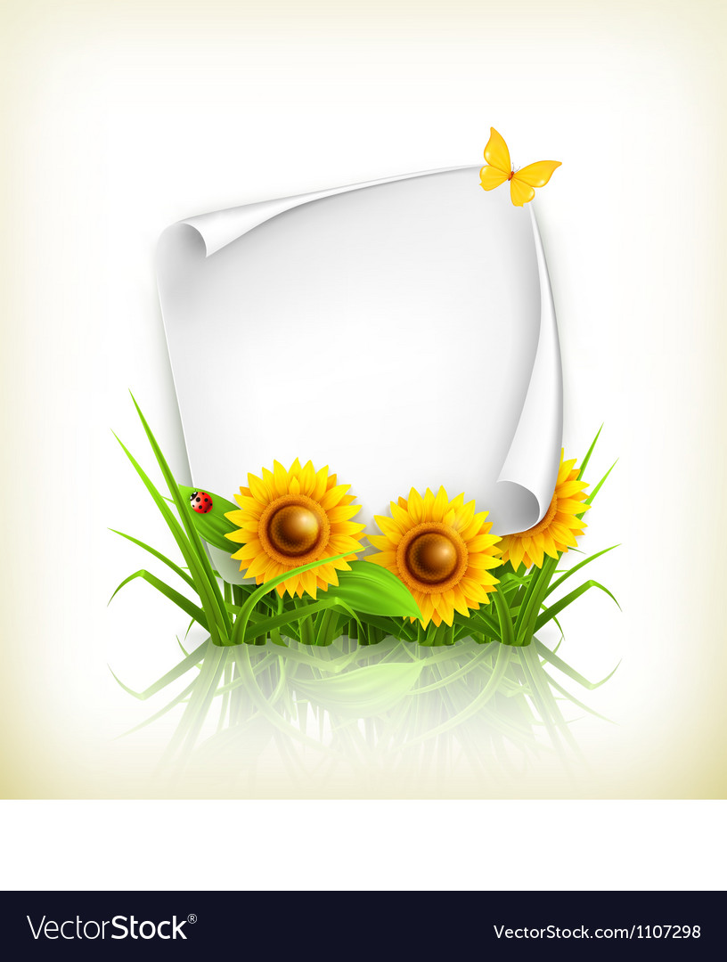 Sunflowers and paper vector