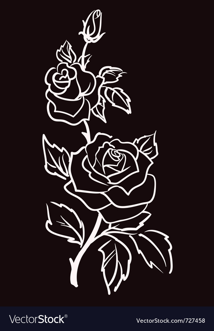 Three white roses vector