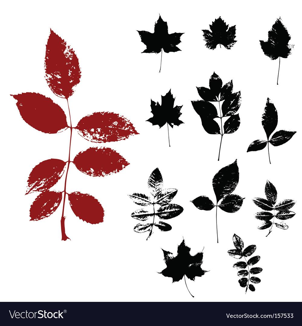 Herbs vector