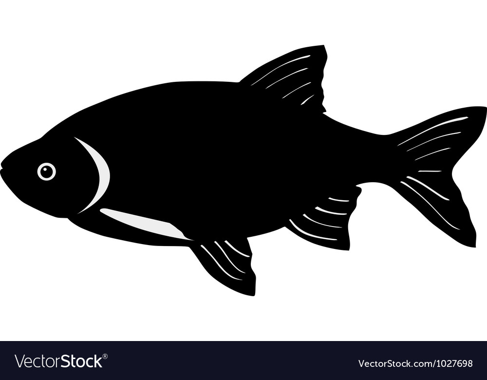 Silhouette of rudd vector