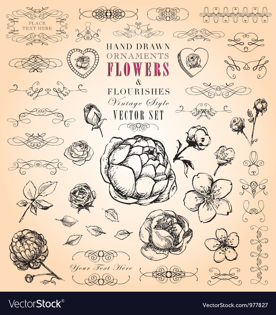 Flowers and flourishes hand-drawn set vector