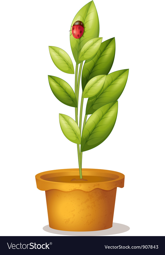 Plant and bug vector
