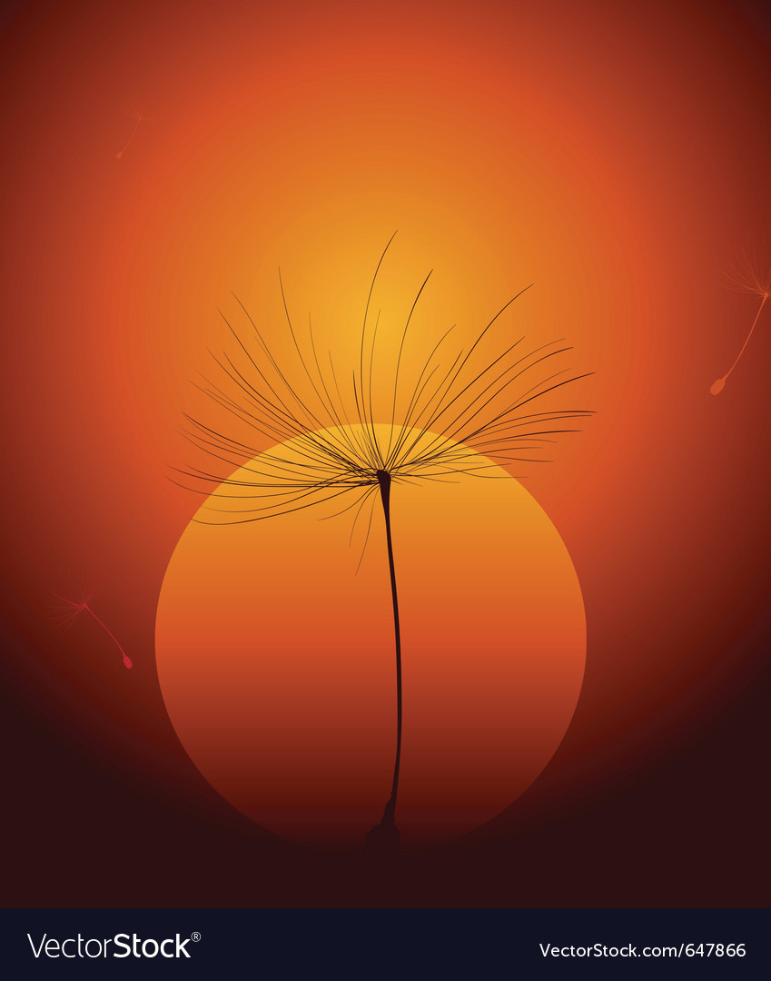 Dandelion seed vector
