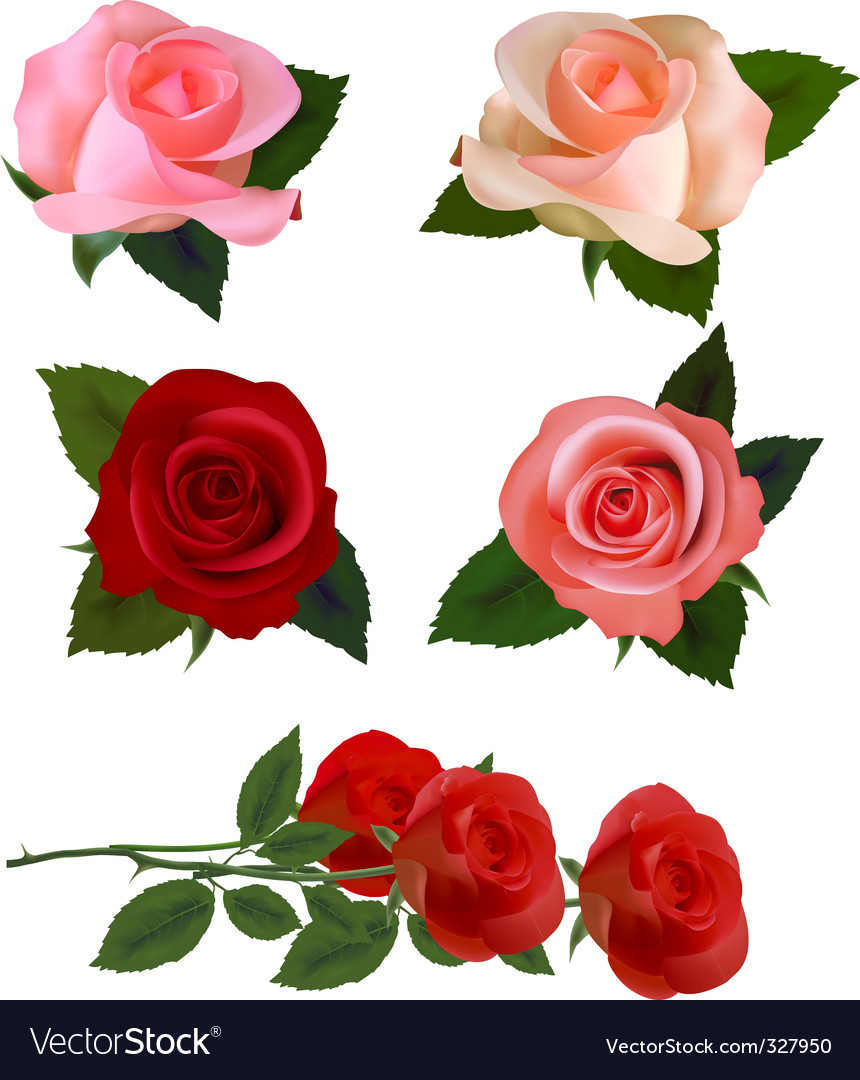 Big set with beauty roses vector