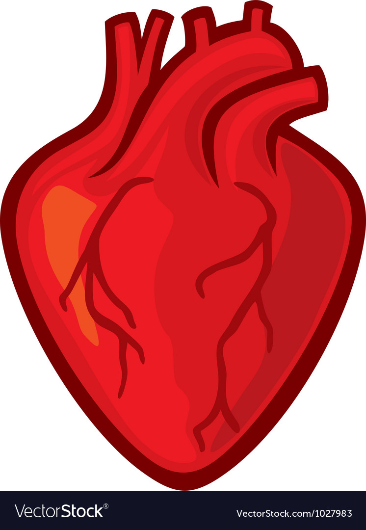 Human Heart Vector Free Download