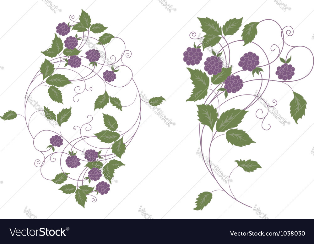 Wood berries vector