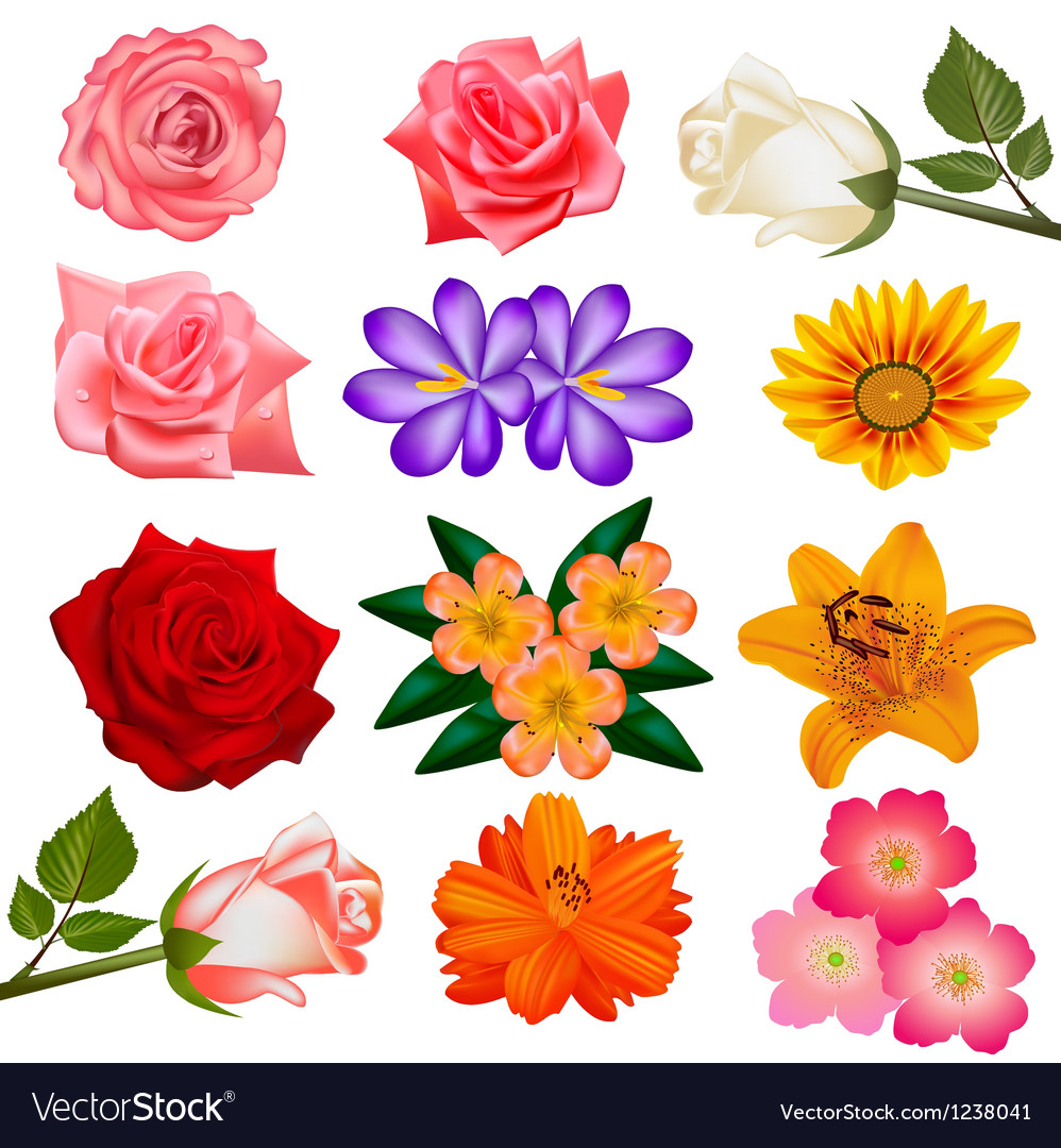 Set of flower on a white background vector