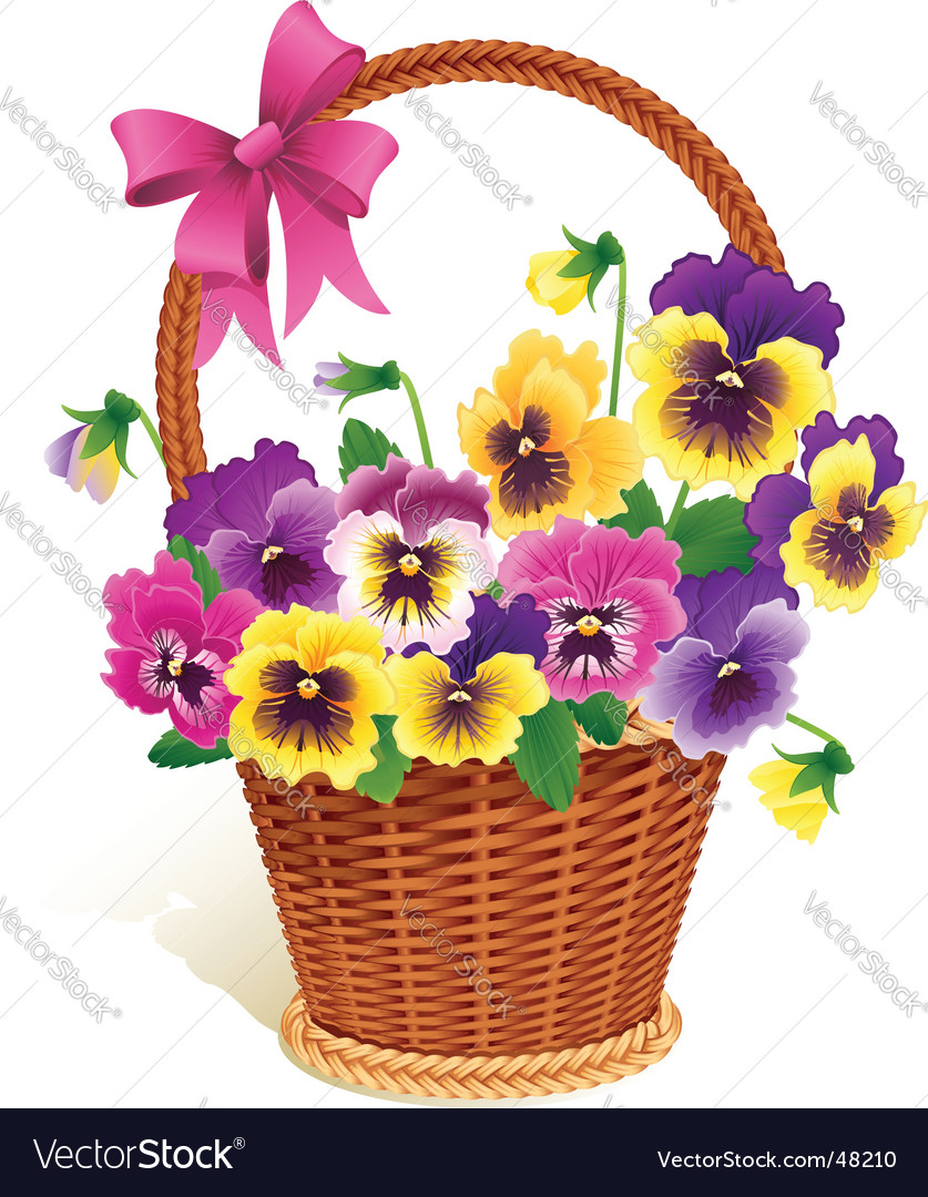 Pansies vector