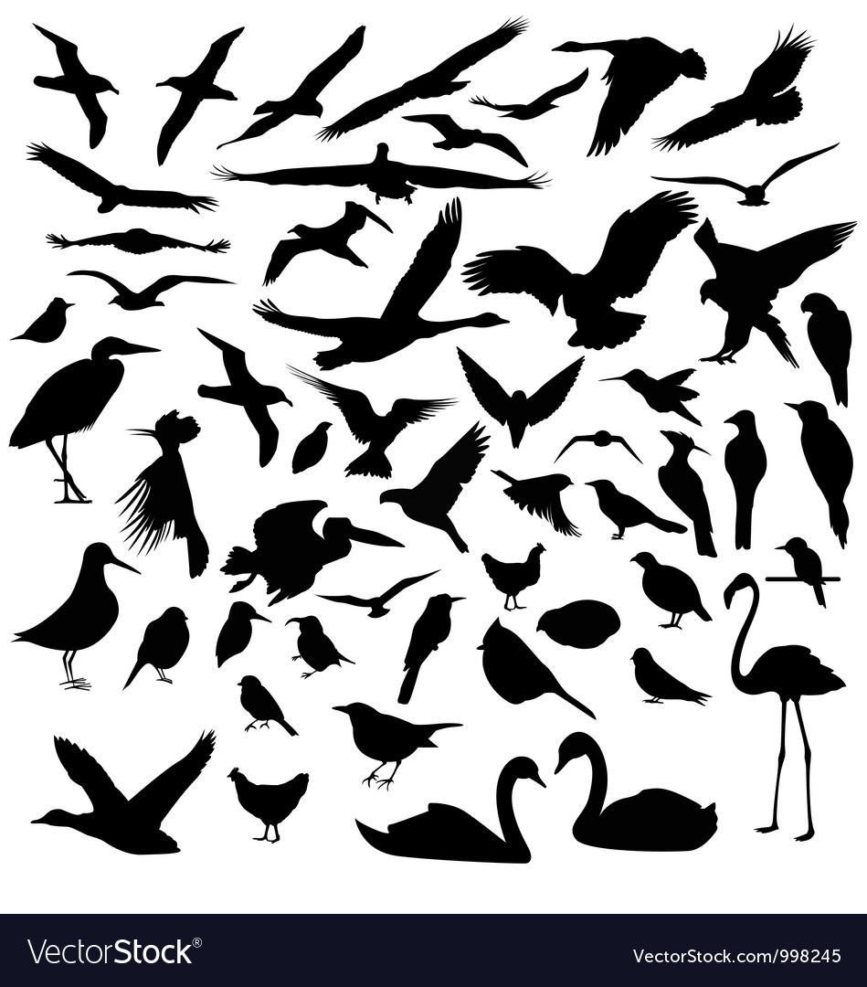 Birds silhouettes vector