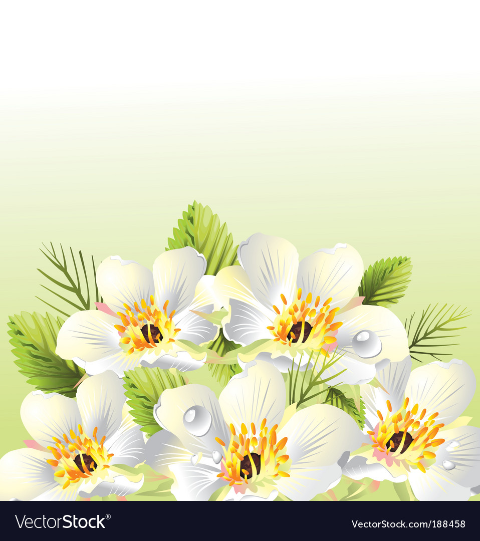Floral graphic background design vector