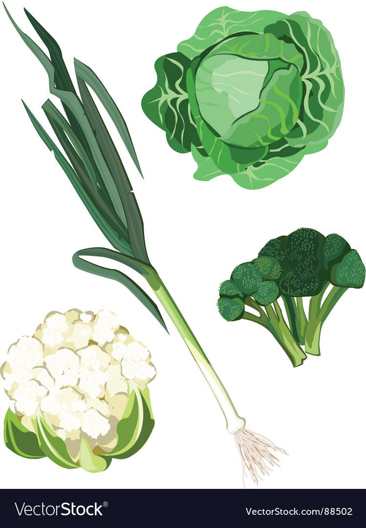 Green vegetable vector