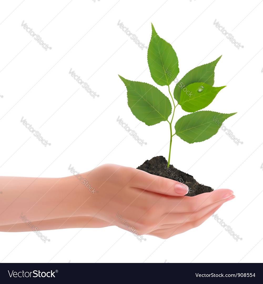 Hand with leaves vector
