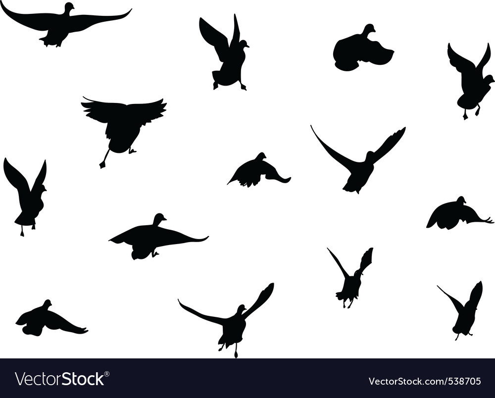 Flying bird silhouettes vector