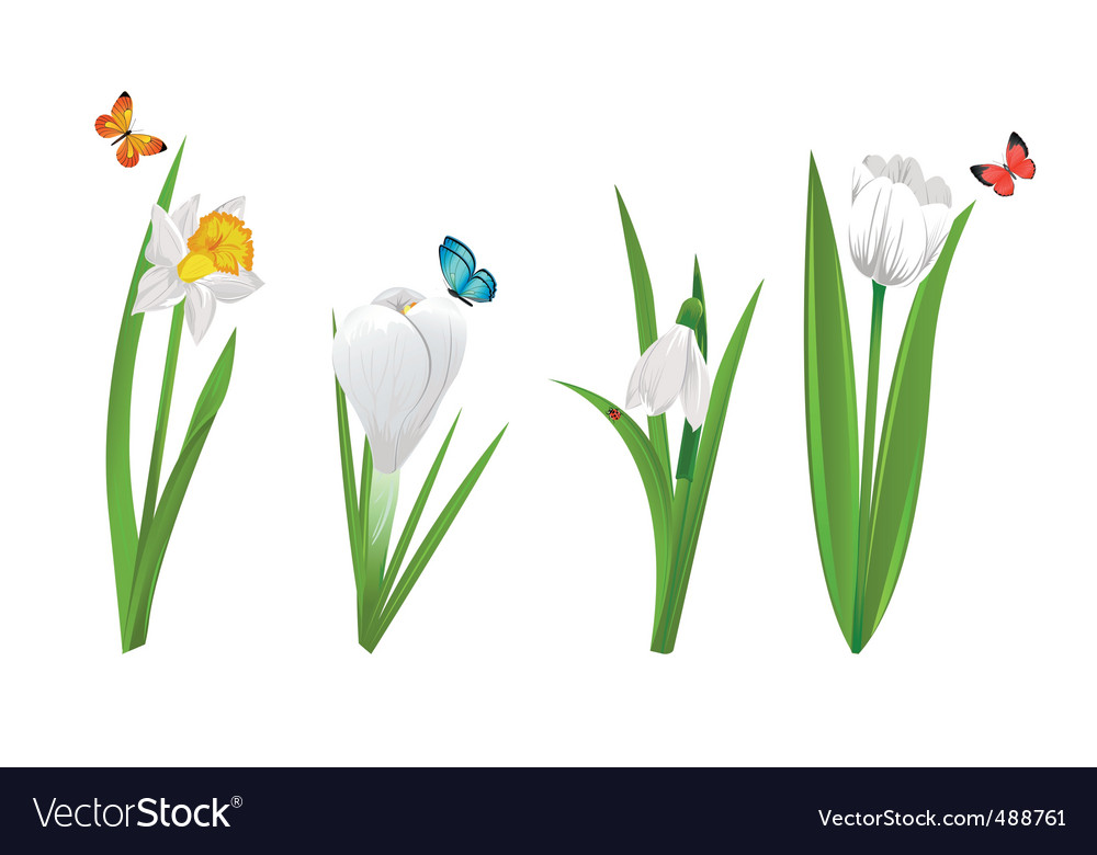 White spring flowers vector