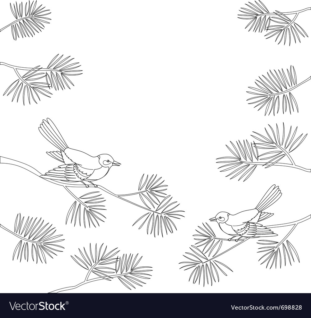 Titmouse on pine branch contour vector