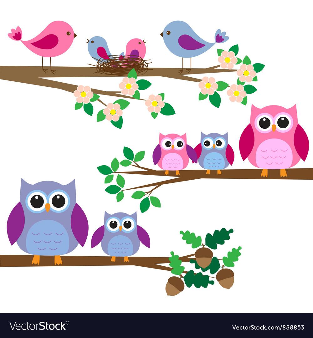 Owls and birds vector