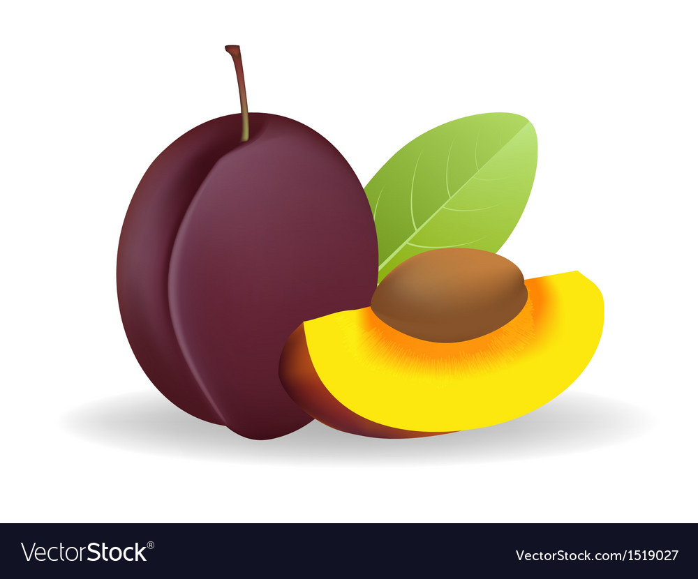 Prunes vector