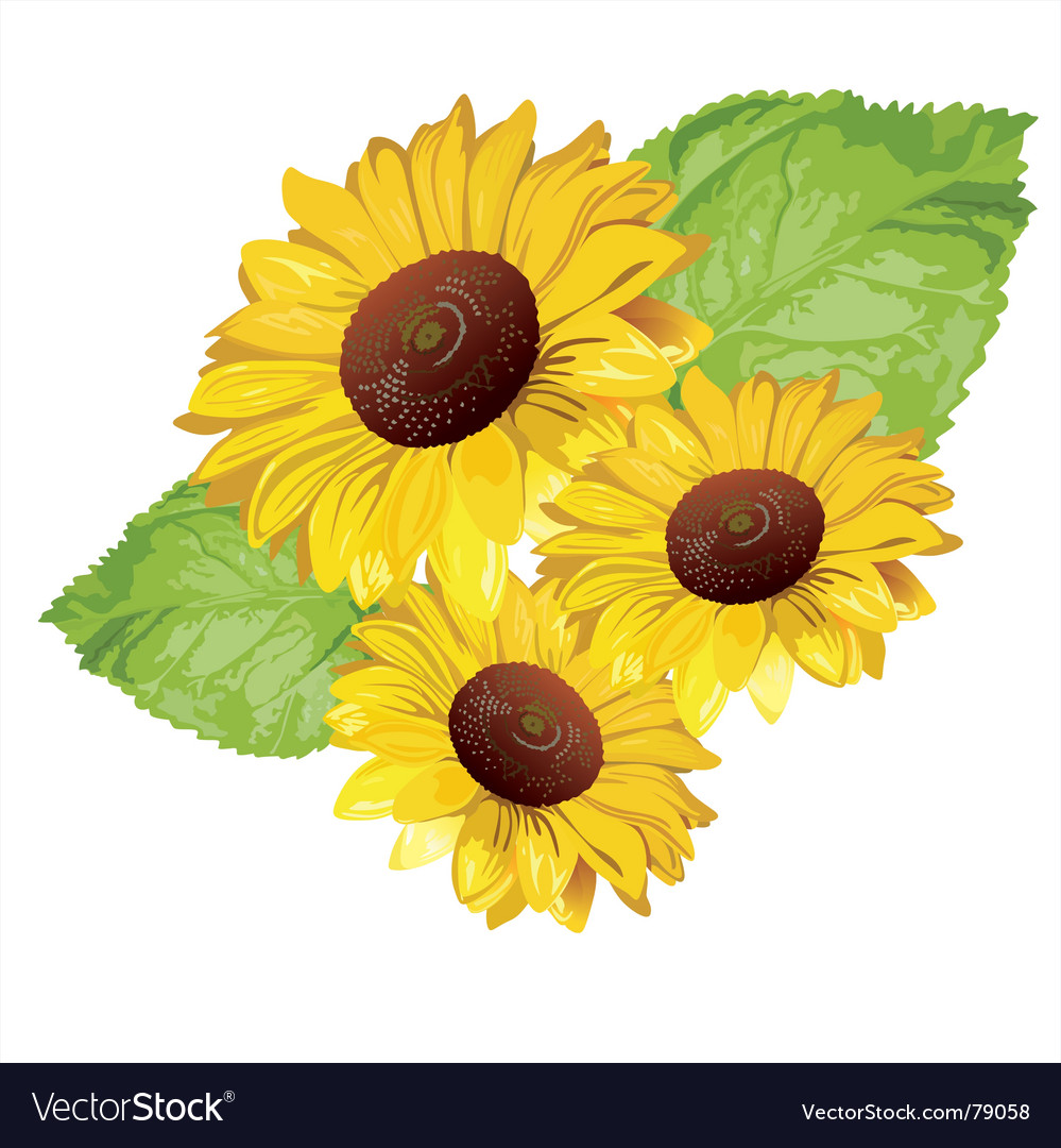 Free sunflower vector