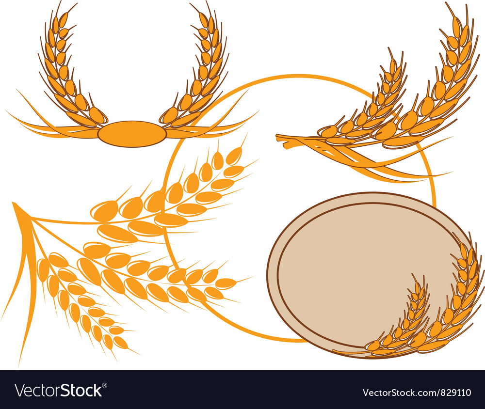 Ear of wheat in a wreath vector