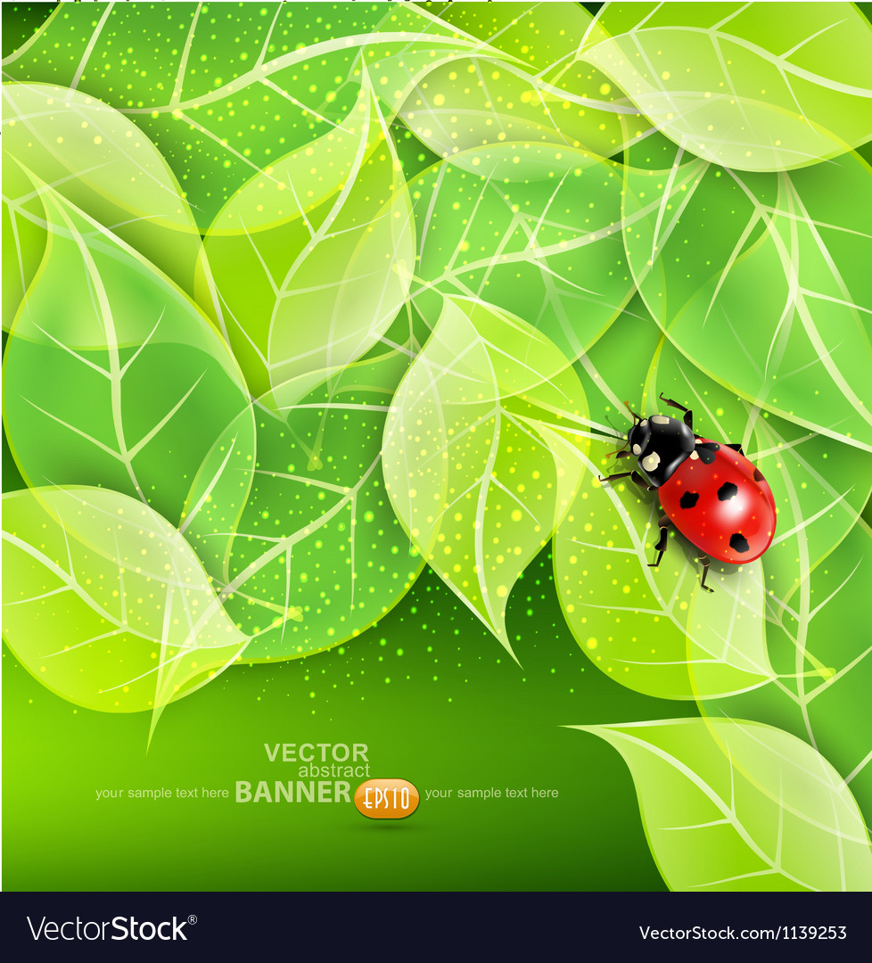 Leaves and ladybug vector