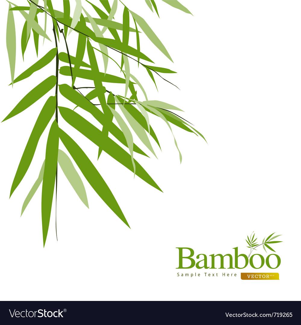 Bamboo greeting card vector