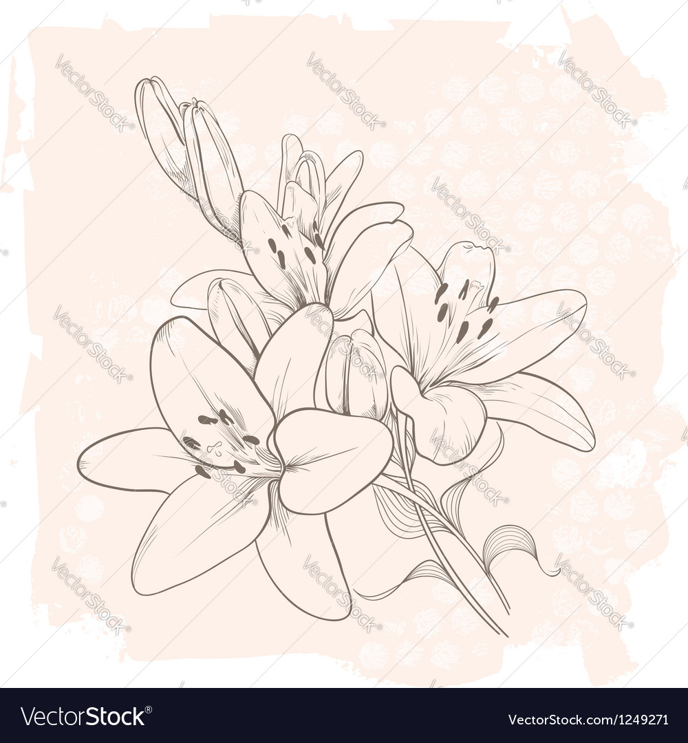 Vintage floral lily vector