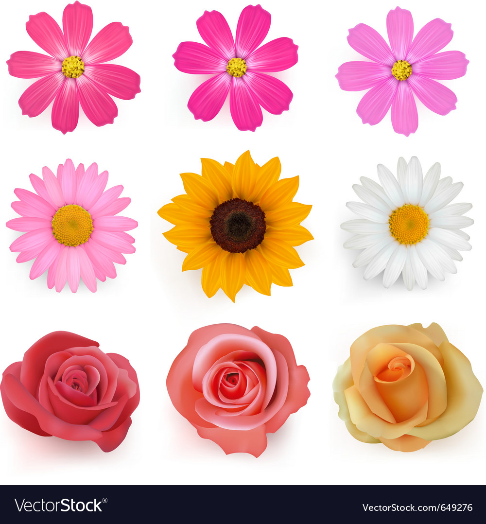 Summer flowers vector