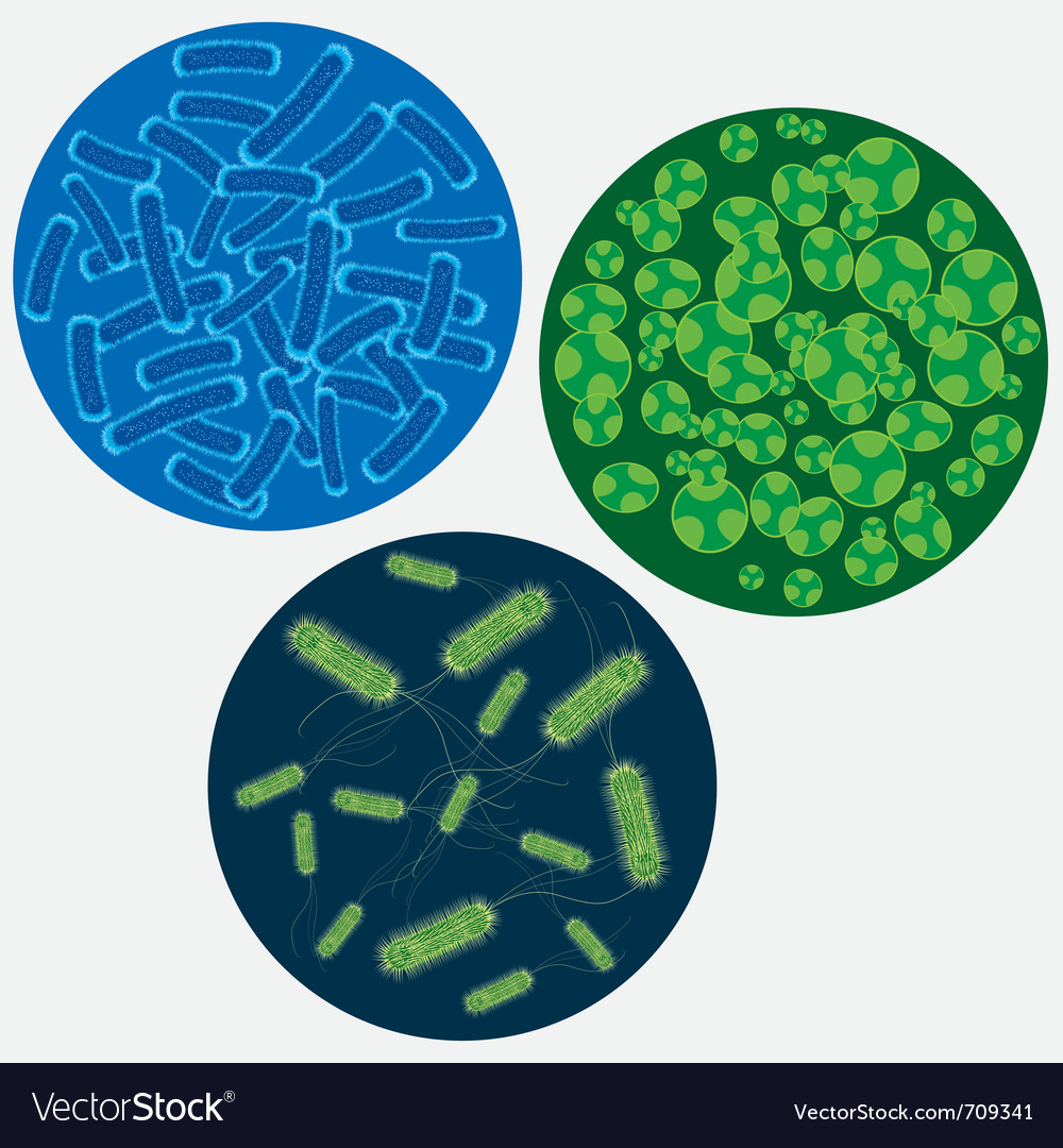 Viruses vector