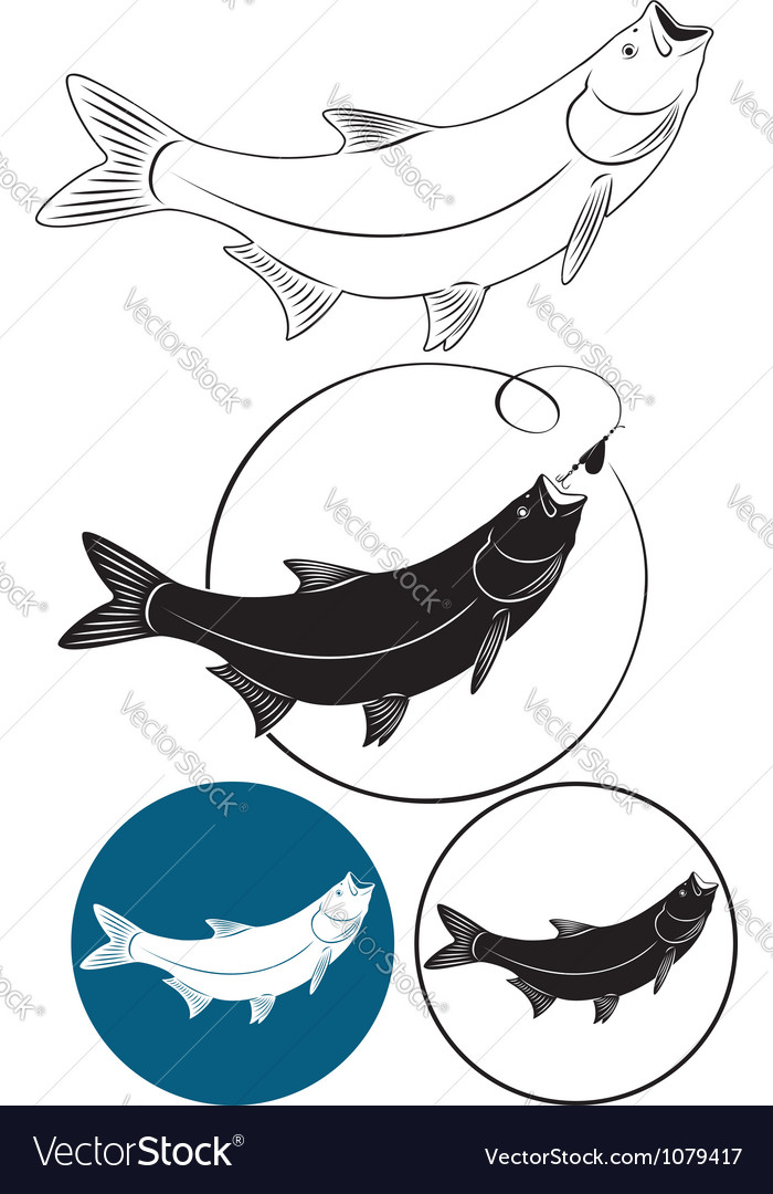 Fish chub vector