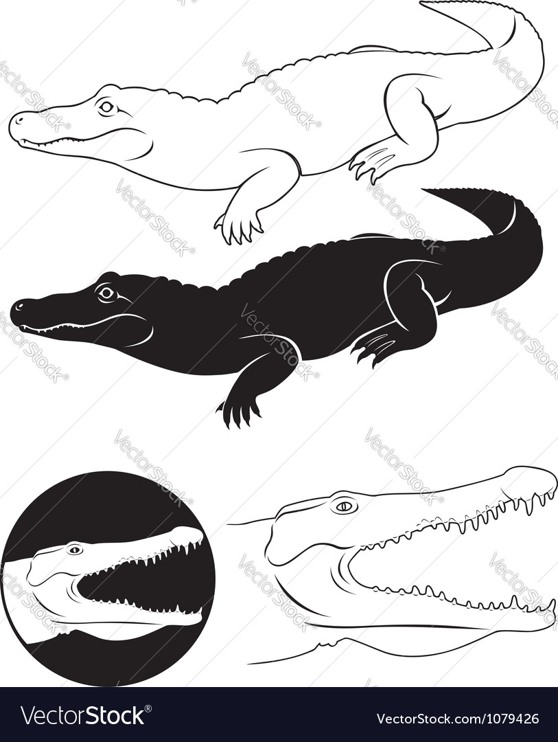 Alligator vector