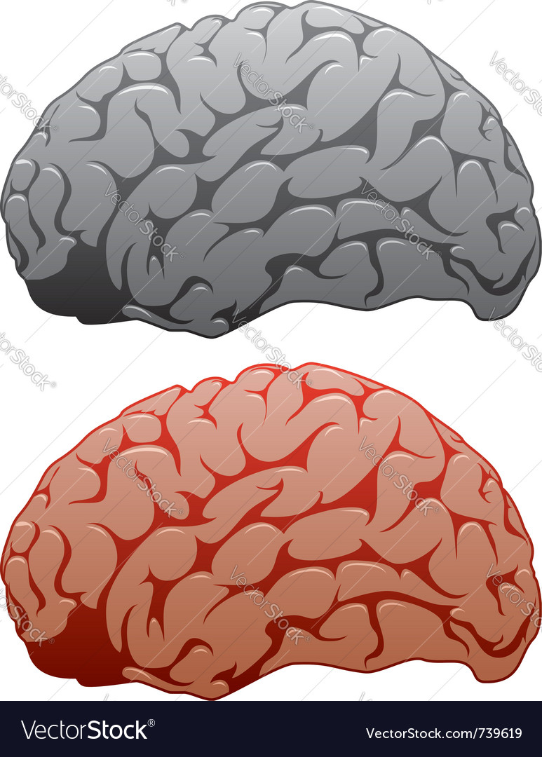 Human brains vector