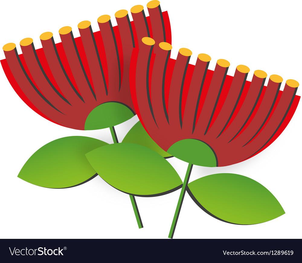 Pohutukawa flower vector
