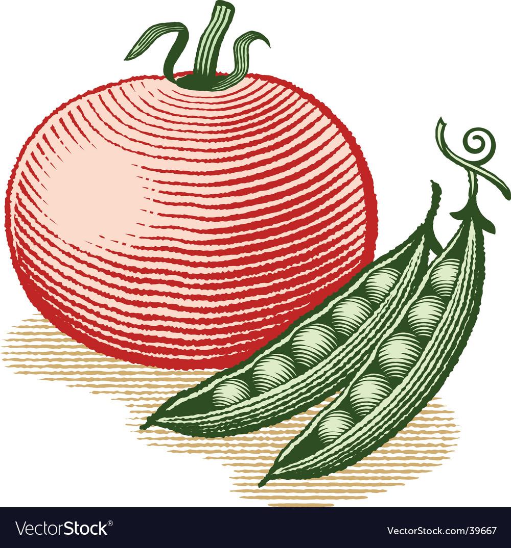 Tomato and peas vector
