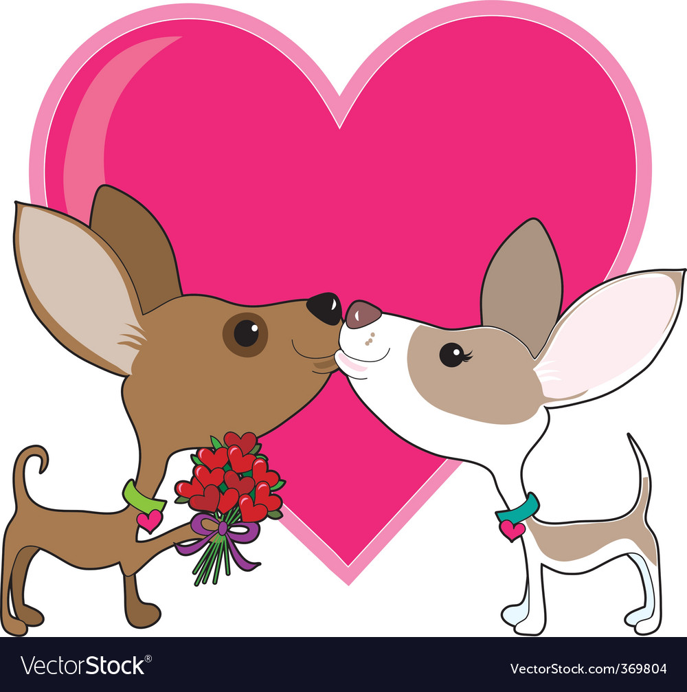 Chihuahua love vector