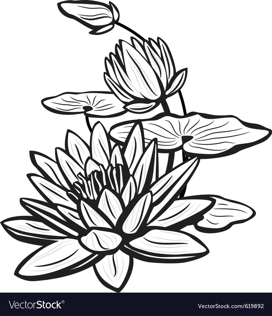 Lotus Flowers Drawings Sketch of lotus flowers vector