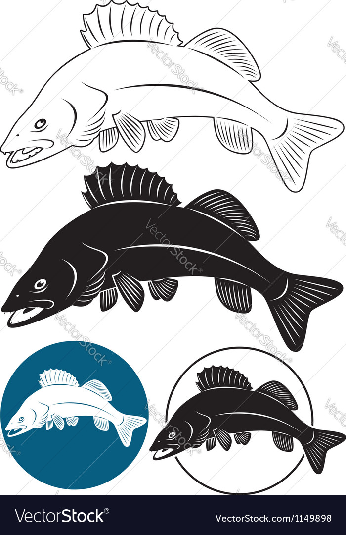 Walleye vector