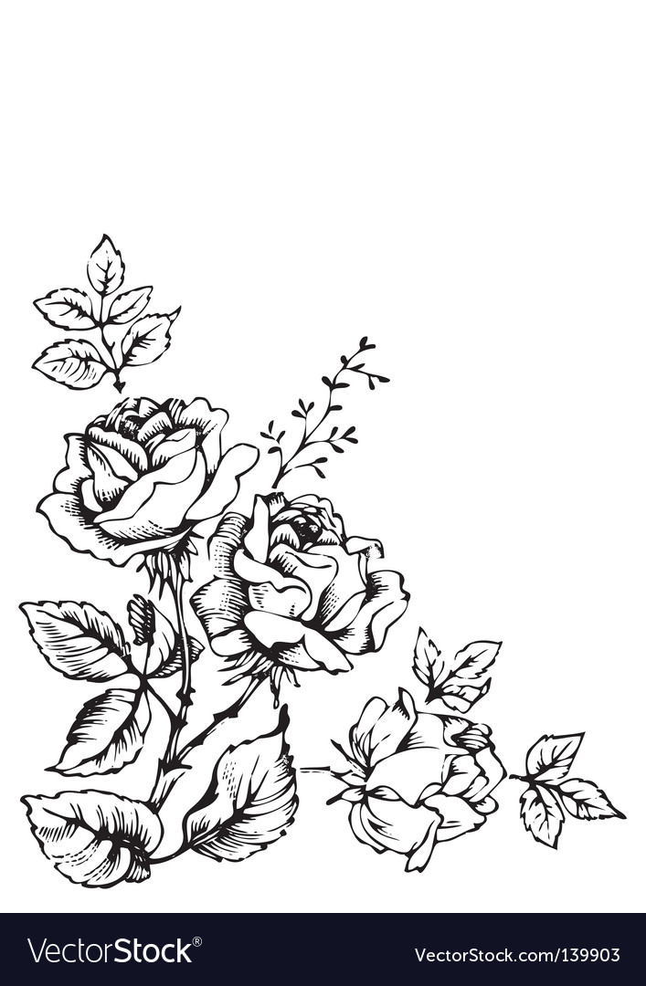 Antique roses engraving vector