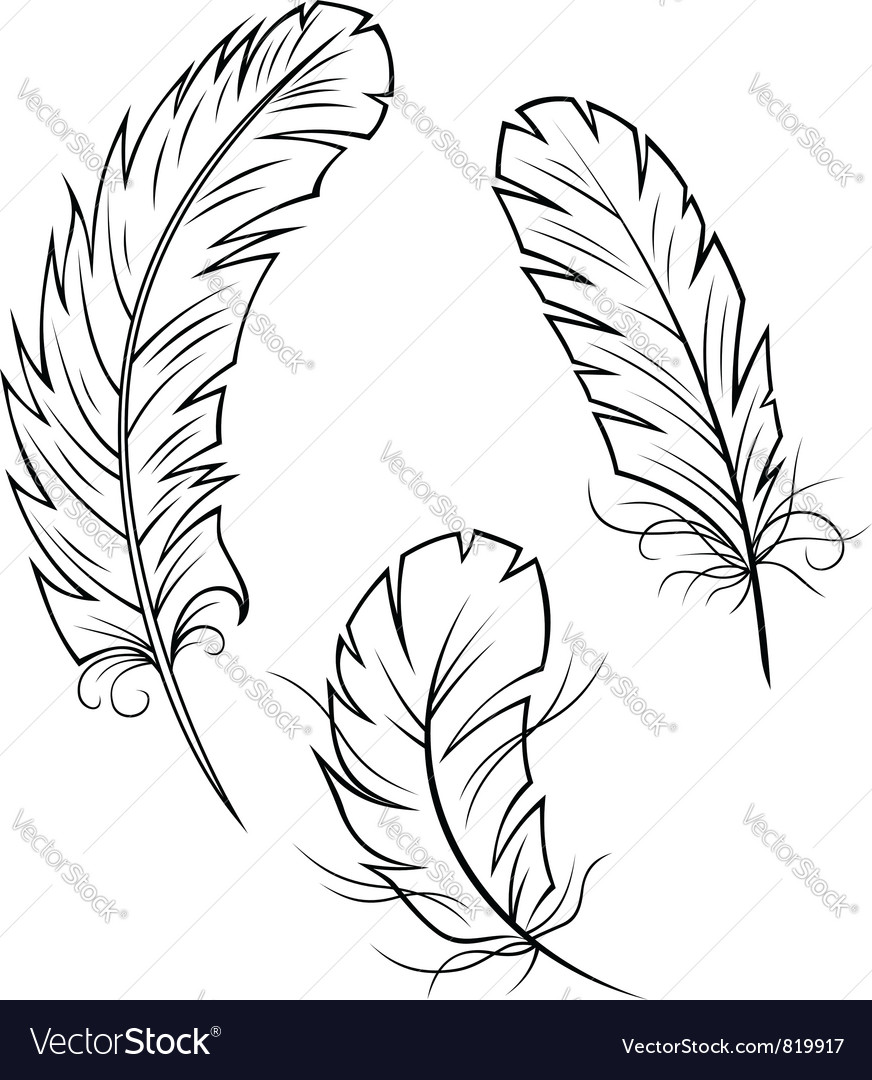 Bird feathers set vector  Bird Feathers Drawing