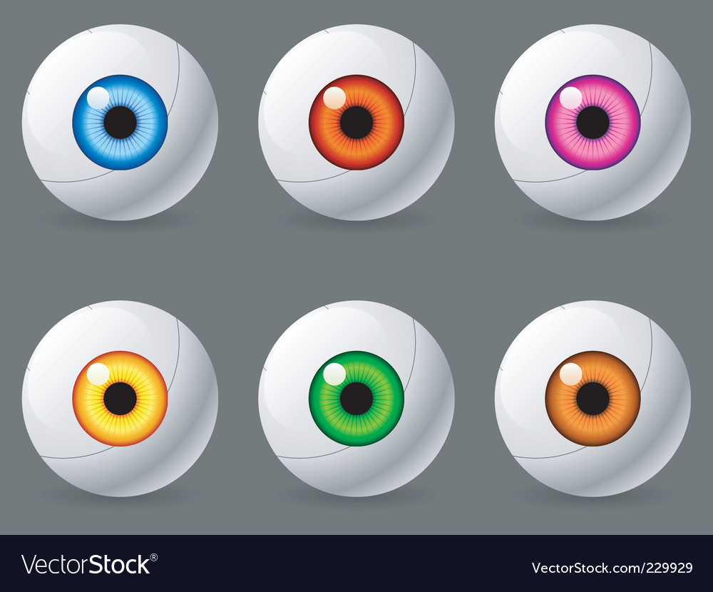 Human eyeballs vector