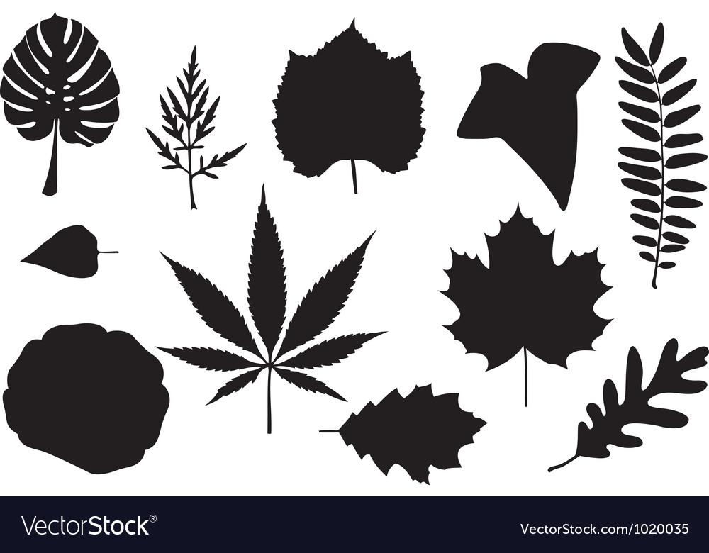 Leaf collage vector