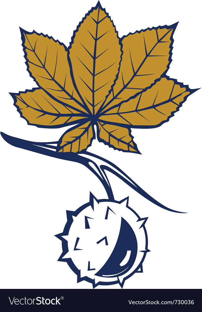 Chestnut leaves with nut vector