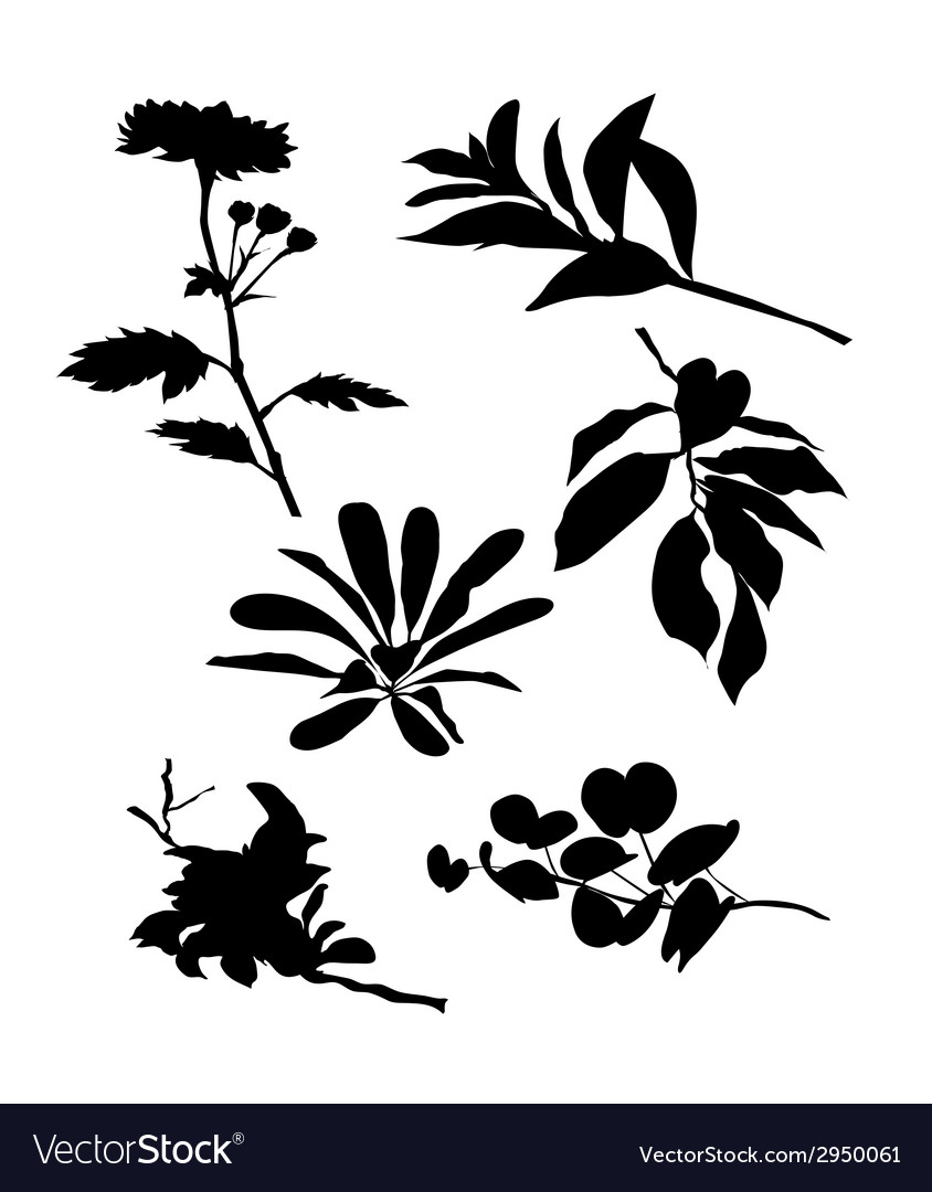 Leaves and flowers silhouette set vector