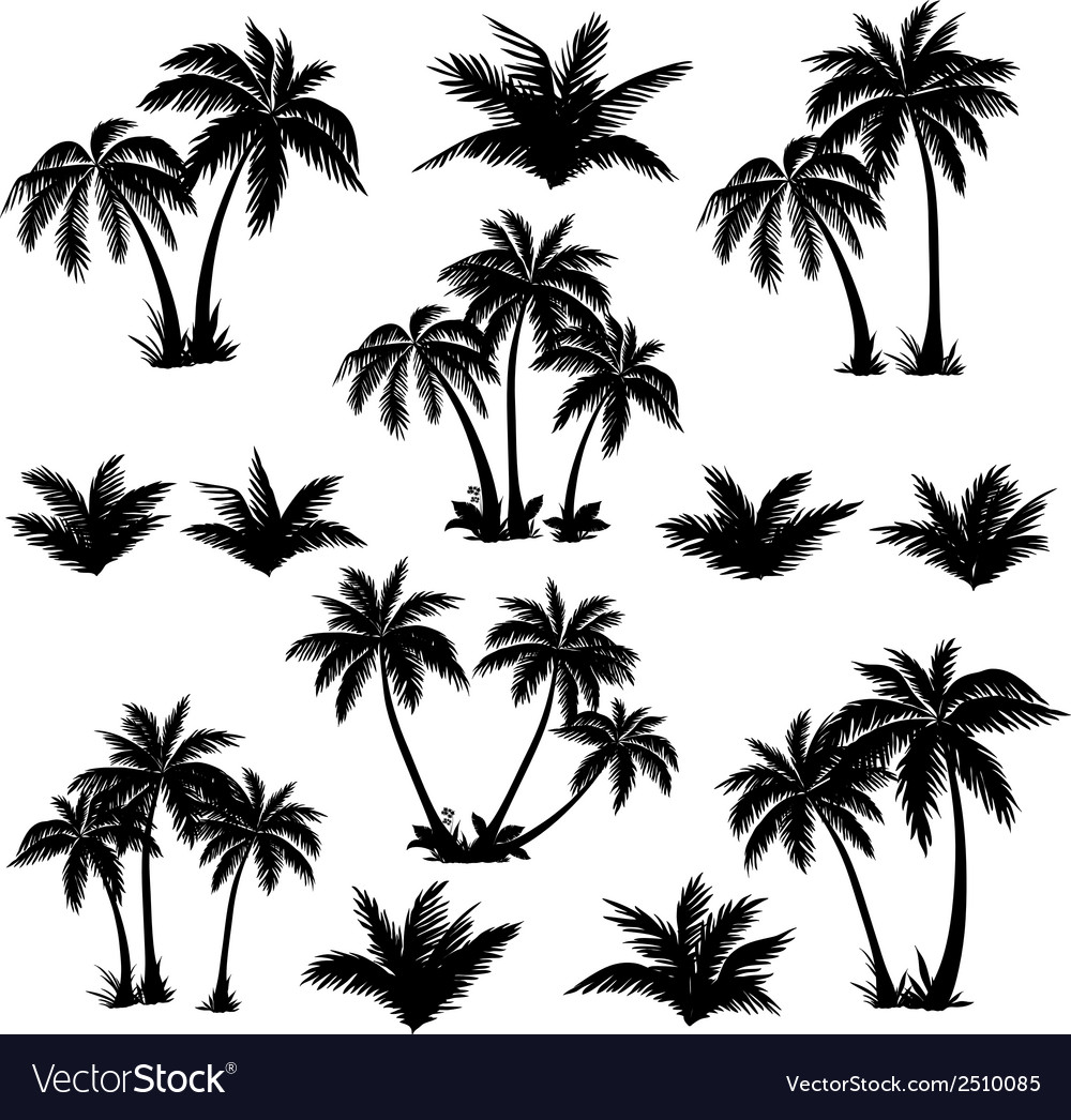 Tropical palm trees set silhouettes vector